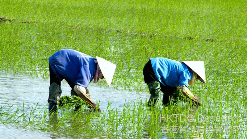 Photo: The primary sector still makes up a notable portion of the Vietnamese economy.